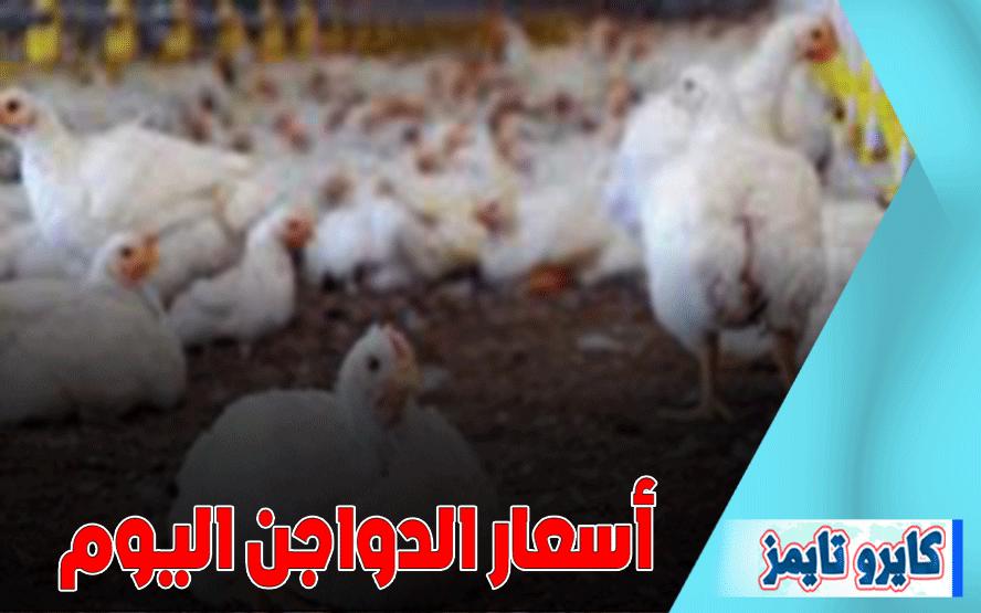 اسعار الفراخ البيضاء اليوم الاربعاء