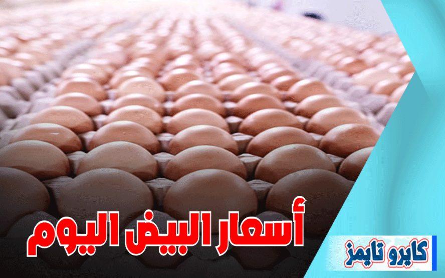 اسعار البيض اليوم الثلاثاء