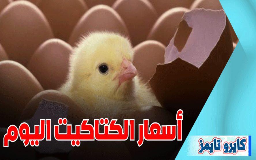 اسعار الكتاكيت البيضاء اليوم الاثنين
