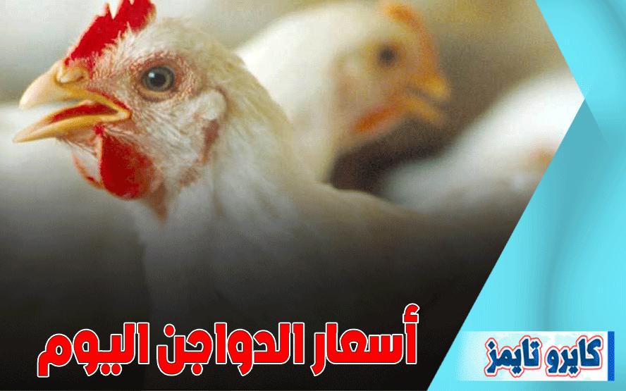 سعر الفراخ البيضاء اليوم الاربعاء 21 اكتوبر 2020