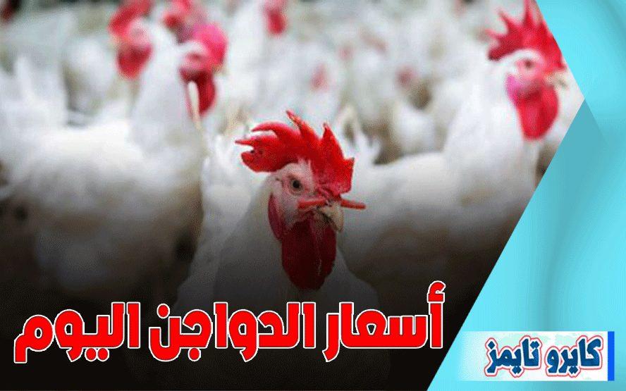 سعر الفراخ البيضاء اليوم السبت 24 اكتوبر 2020
