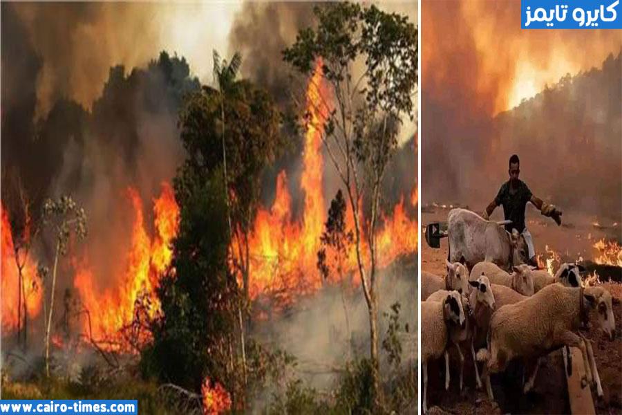 حرائق ولاية تيزي وزو
